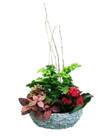 Christmas Cheer Planter Dish Garden Plant