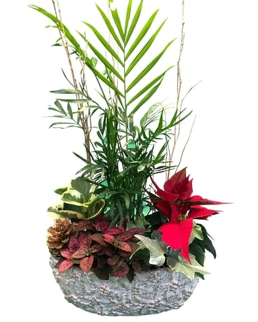 Holiday Bliss Planter Dish Garden Plant