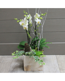 White Wash Holiday Orchid Flower Arrangement