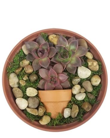 Succulent Garden In Fort Worth Tx Tcu Florist