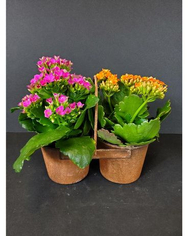 Blooming Buckets Dish Garden Plant