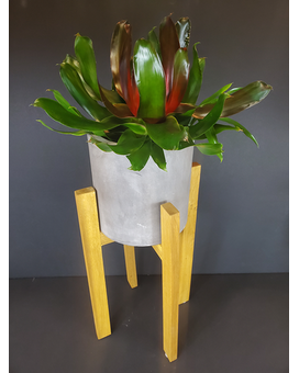 Large Plant Stand with Bromiliad Plant