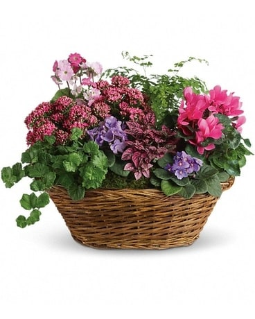 Blooming Baskets