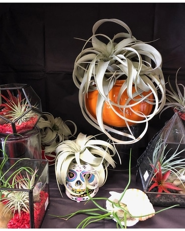 Air Plant Flower Arrangement