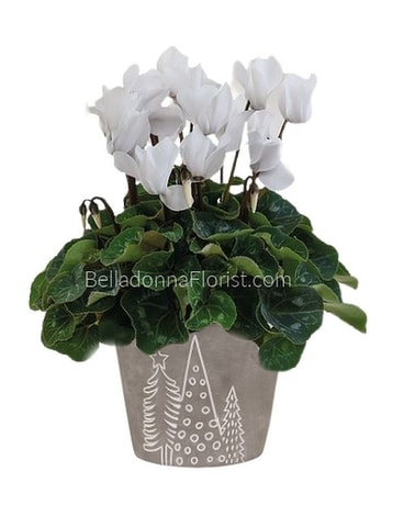 Nordic Forest Cyclamen Planter Plant