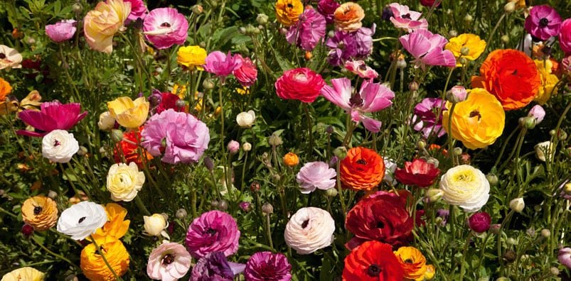 Palmer Flowers buys more than 60% of our flowers from American flower growers.