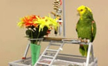 Jake the parrot on his perch