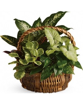 Designer's Choice Plant Basket Flower Arrangement