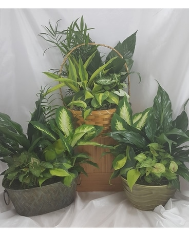 Small green planter Plant