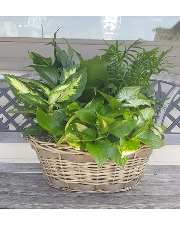 Large basket planter Plant