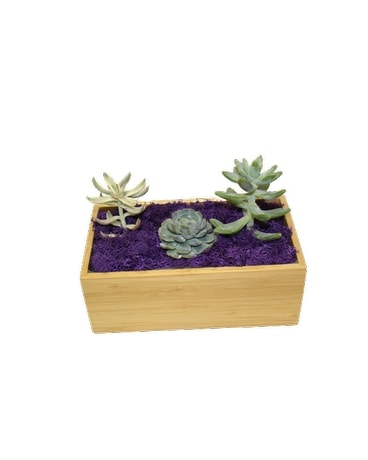 small succulent planter accented in purple Plant