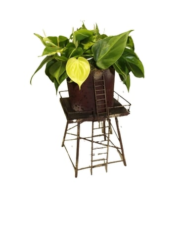 Philodendron plant in metal tower container Plant