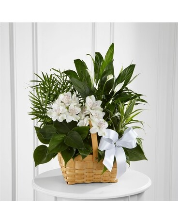 The FTD® Peace & Serenity™ Dishgarden Flower Arrangement