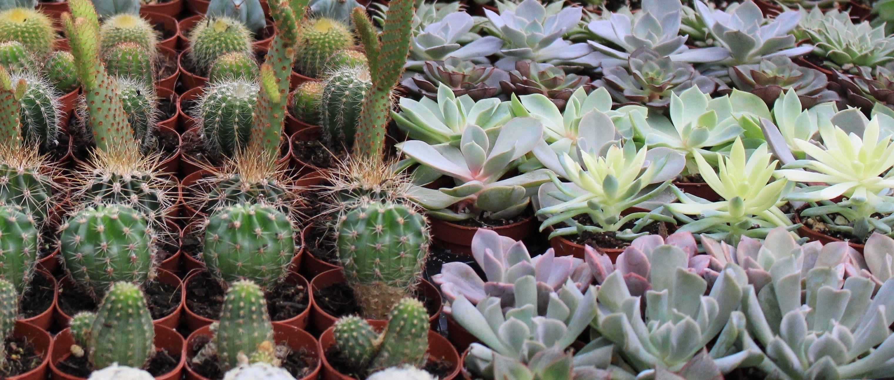 Wide Variety of Cactus & Succulents!