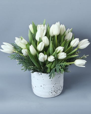 Let the Tulips Sing! (white)