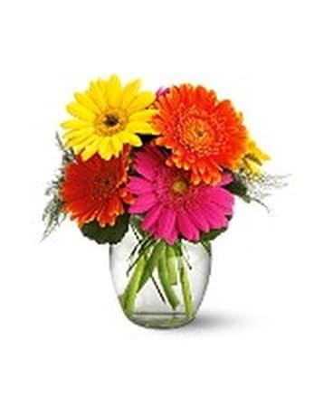 Telefloras Fiesta Gerbera Vase In New Glasgow Ns Mckeans Flowers