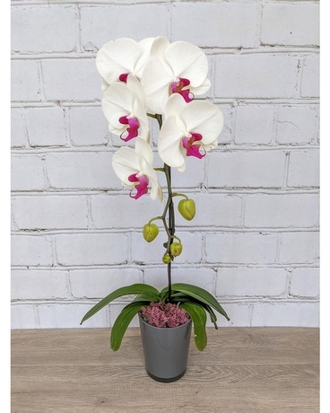 Large White Phalaenopsis Orchid Cascade Flower Arrangement