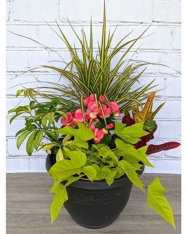 Blooming Tropical Patio Planter Plant