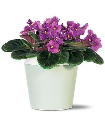 Purple African Violet Flower Arrangement