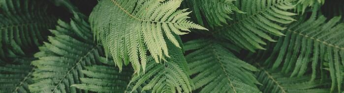 Nasa Approved Plants