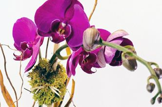 Orchids are in bloom at Starbright Floral Design
