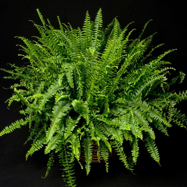 Plant Care Glossary Link