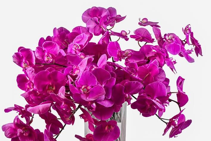 Starbright Floral Design Press Kit
