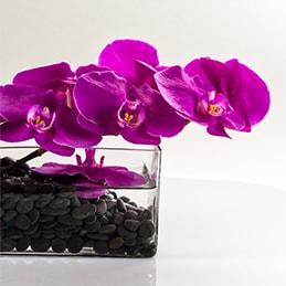 Cut Orchid Boutique