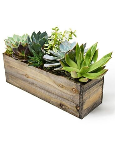 Magic Box of Succulents