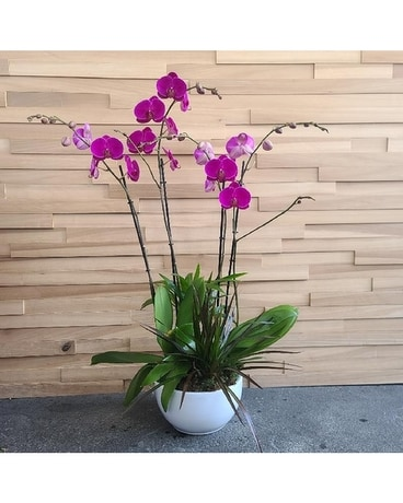 8in Orchid Garden In Purple