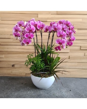 10in Orchid Garden In Variegated Purple Plant