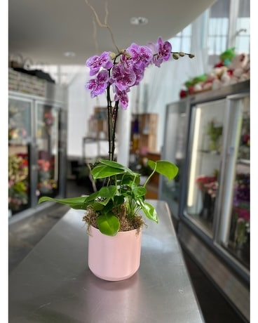 7in Orchid Garden in Yellow Plant