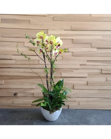 8in Orchid Garden with White Scoop Pot