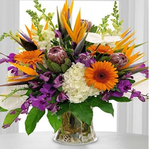 Flower arrangement filled with gorgeous Gerber daisies, white hydrangeas, birds of paradise, snap dragons, arthuriums, queen proteas and dendrobium orchids