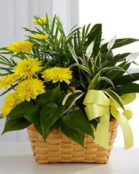 Same-Day Get Well Flower Delivery to Franciscan Health Hospital