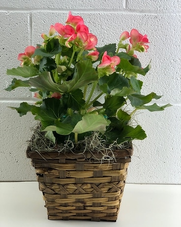 Begonia Flower Arrangement