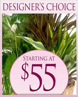 Designer's Choice Planter $55.00 Flower Arrangement