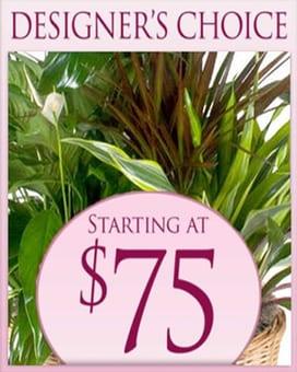 Designer's Choice Planter $75 Flower Arrangement