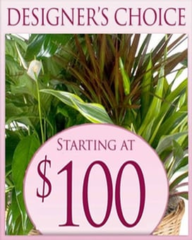 Designer's Choice Planter $100 Flower Arrangement