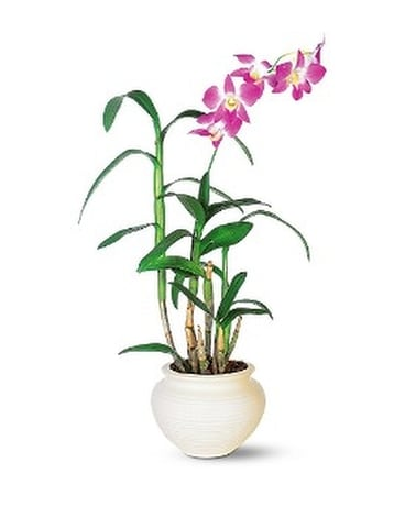 Dendrobium Orchid Flower Arrangement