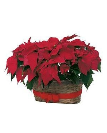 Double Poinsettia Basket Item Custom product