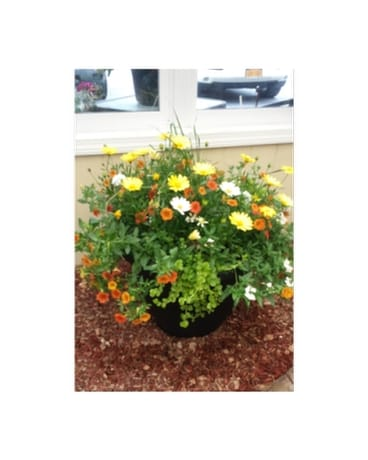 Jumbo Porch Planter