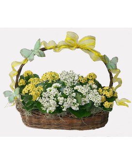 Kalanchoe Garden Basket Flower Arrangement