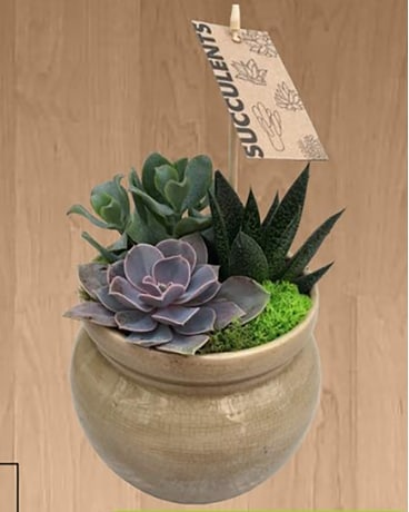 Honey Pot Succulent Flower Arrangement