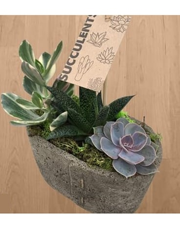 Stitched Succulent Garden Flower Arrangement