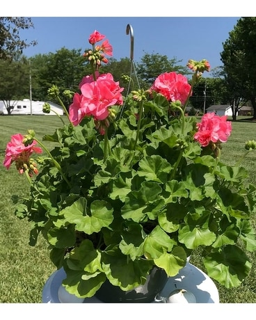BLOOMING HANGING BASKET Custom product