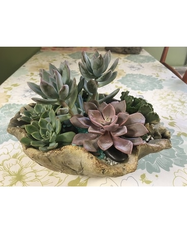 Succulent Arrangement in Cement Bowl Flower Arrangement