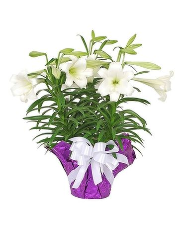 Triple Easter Lilly Flower Arrangement