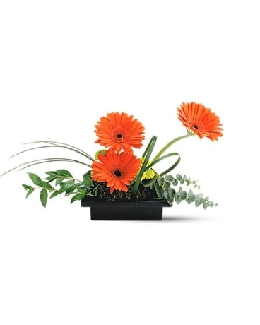 Teleflora's Zen Gerbera Bowl Flower Arrangement