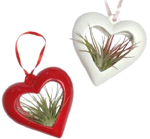 Tilandsia (Air Plant) Heart 3